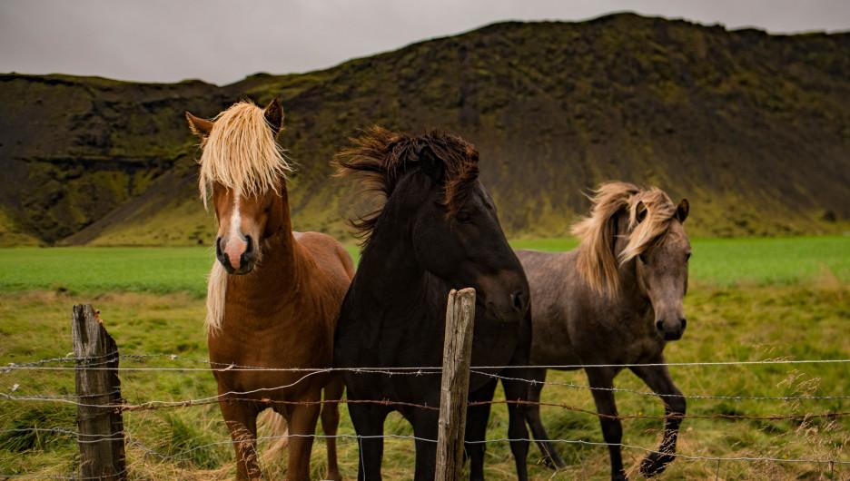 Лошади на природе.