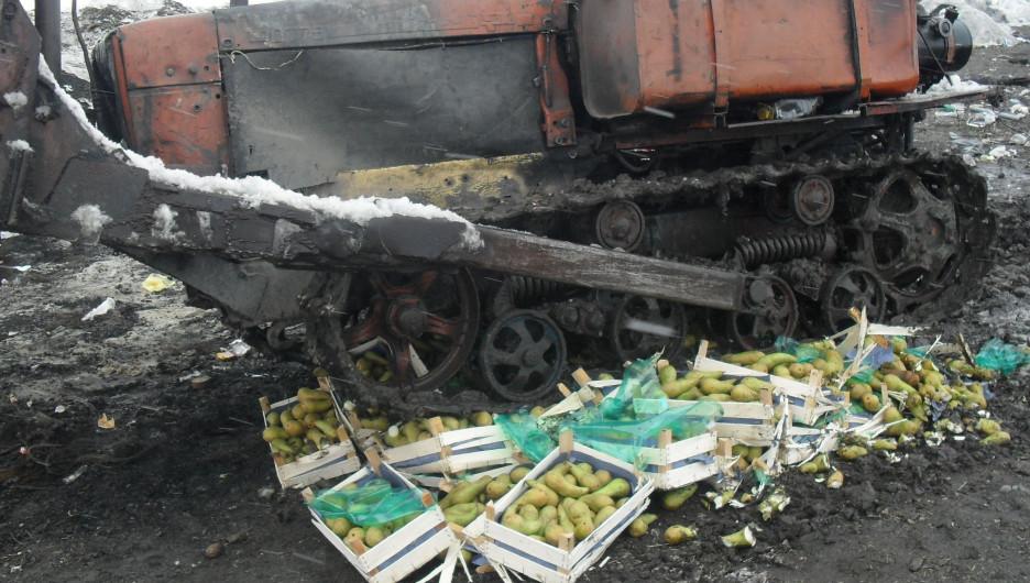 Уничтожение голландских груш.