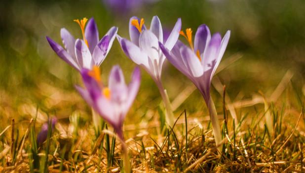 Цветы. Весна.