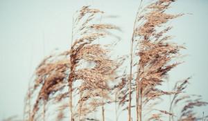 Ветер.