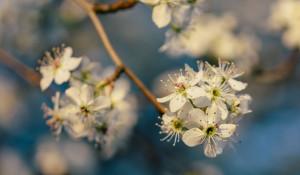 Цветение. Весна.