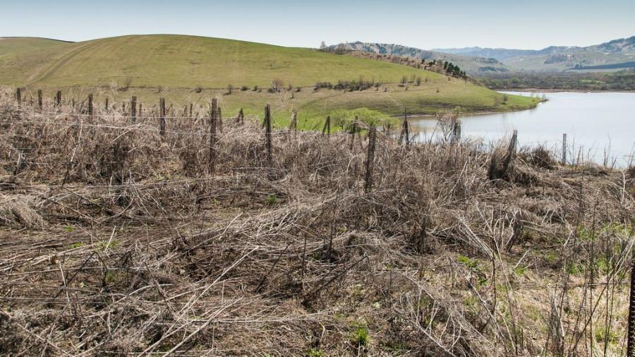 Французские виноградники в Алтайском районе. 27 апреля 2017 года