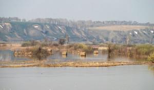 Пойма Оби в районе Барнаула. Паводок на Алтае. 28 апреля 2017 года.