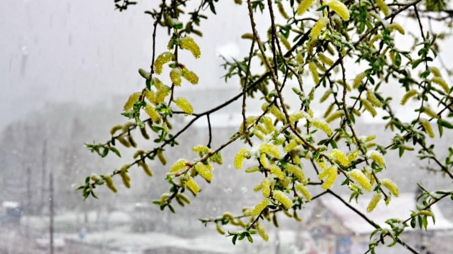 Снег 1 мая 2017 в Барнауле.
