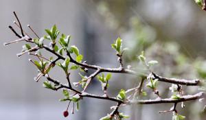 Деревья и цветы в краевой столице покрылись снегом