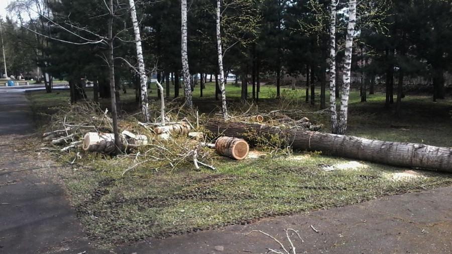 В Центральном парке спиливают старые деревья. Барнаул, 4 мая 2017 года.