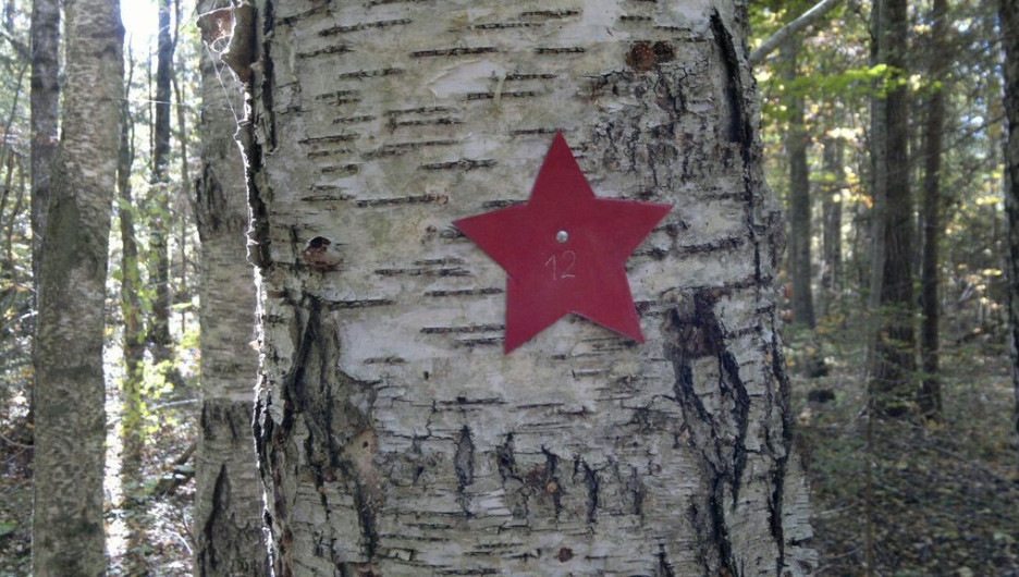 "Метка отряда ""За Родину"" - красная звезда."