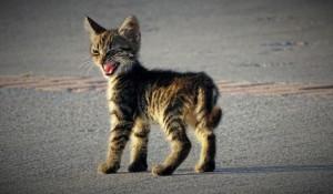 Котята, которые не в духе.