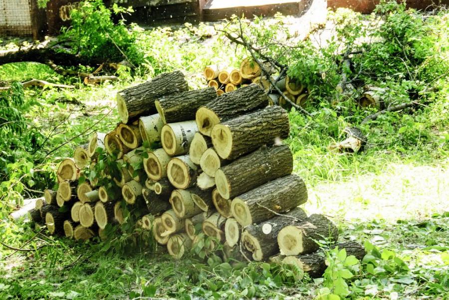 """Вырубка деревьев в парке """"Изумрудный""""."""