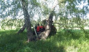 На Алтае мужчина угнал трактор и спрятал его под деревом