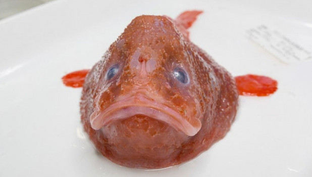 Рыба-гроб