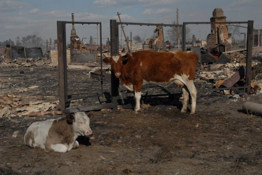 Село Николаевка после пожара. Алтайский край, 9 сентября.