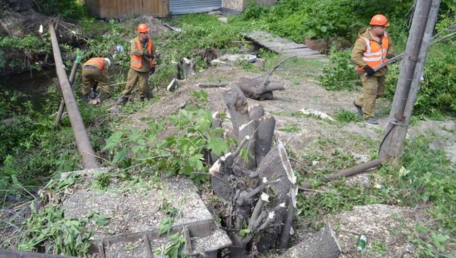 Вырубка деревьев возле Пивоварки