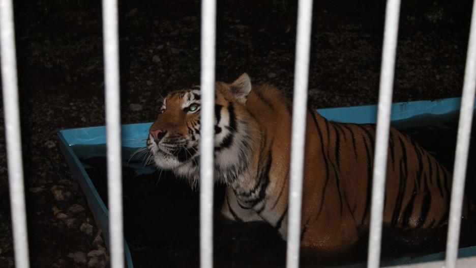Ночь в Барнаульском зоопарке 30 июня 2017.