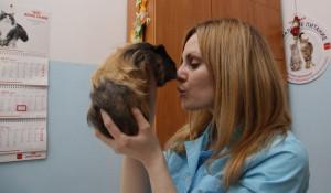 Преимущества кастрации и стерилизации домашних животных.