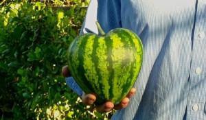 Удивительные модификации овощей и фруктов.