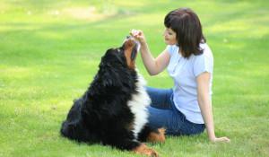 """Корма """"Дилли"""" сохранят аппетит и жизненную энергию вашей собаки."""