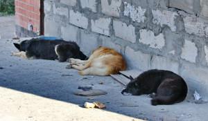 Барнаульские кошки и собаки.