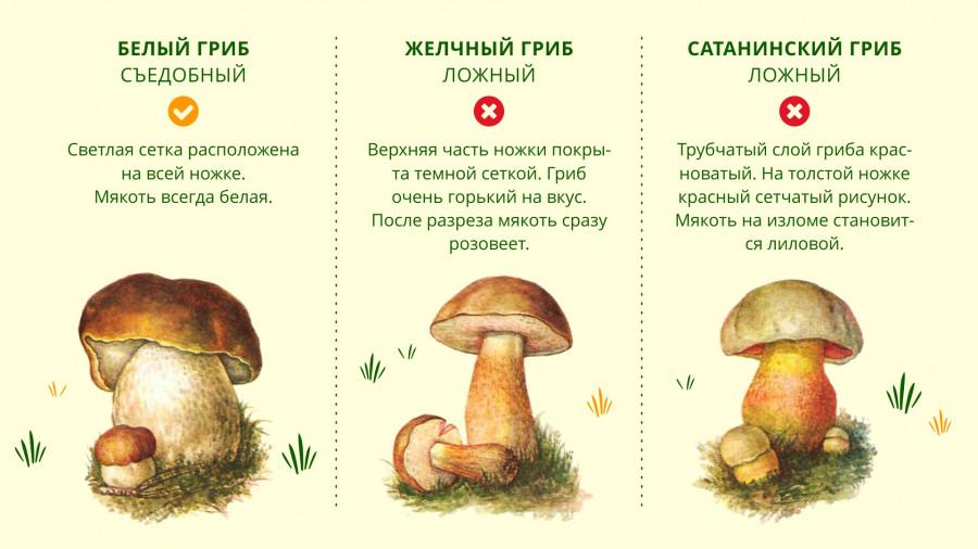 Двойники белого гриба.