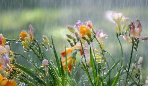Лето. Дождь.