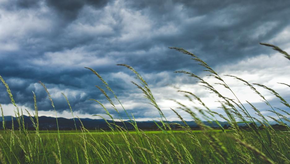 Поле. Природа. Дождевые тучи.