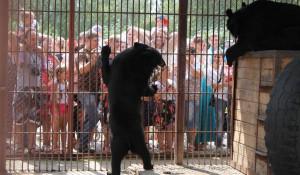 День рождения Барнаульского зоопарка-2017.