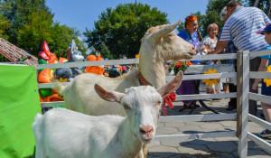 Фестиваль козьего молока-2017 в Барнауле.