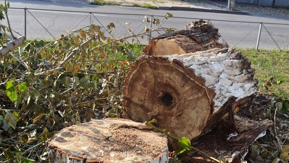 Спиленные деревья. Фото мэрии