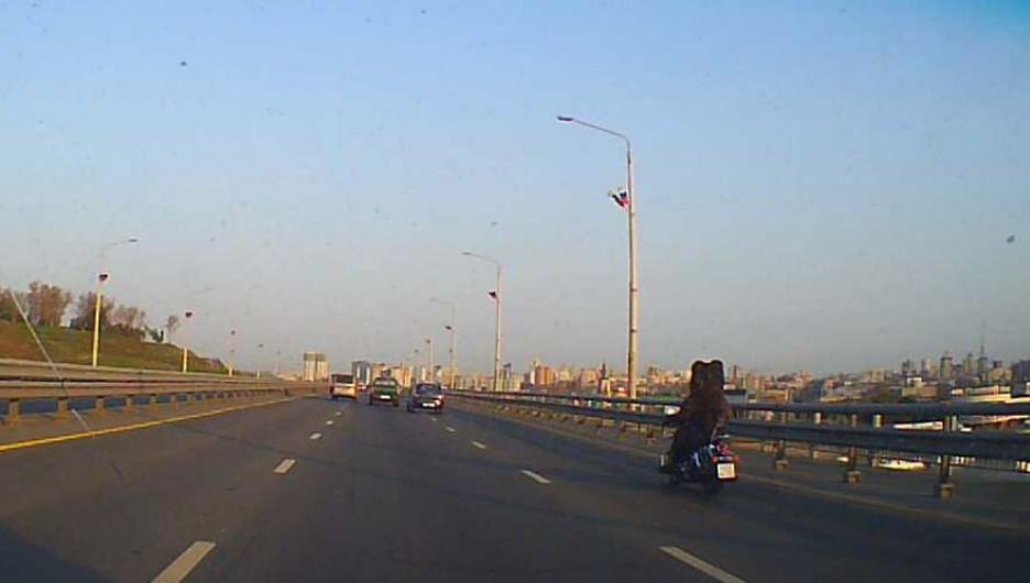 Мотоциклист в костюме медведя на новом мосту