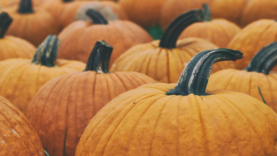 Осень. Урожай.