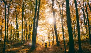 Осень. Мужчина в лесу.