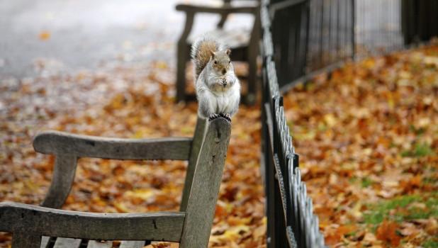 Белочка, осень.