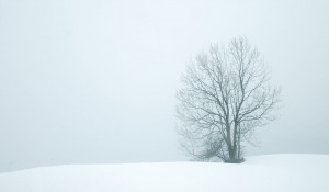 Зима. Метель, пурга.