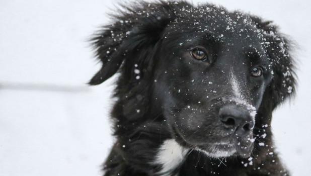 Собака. Идет снег.