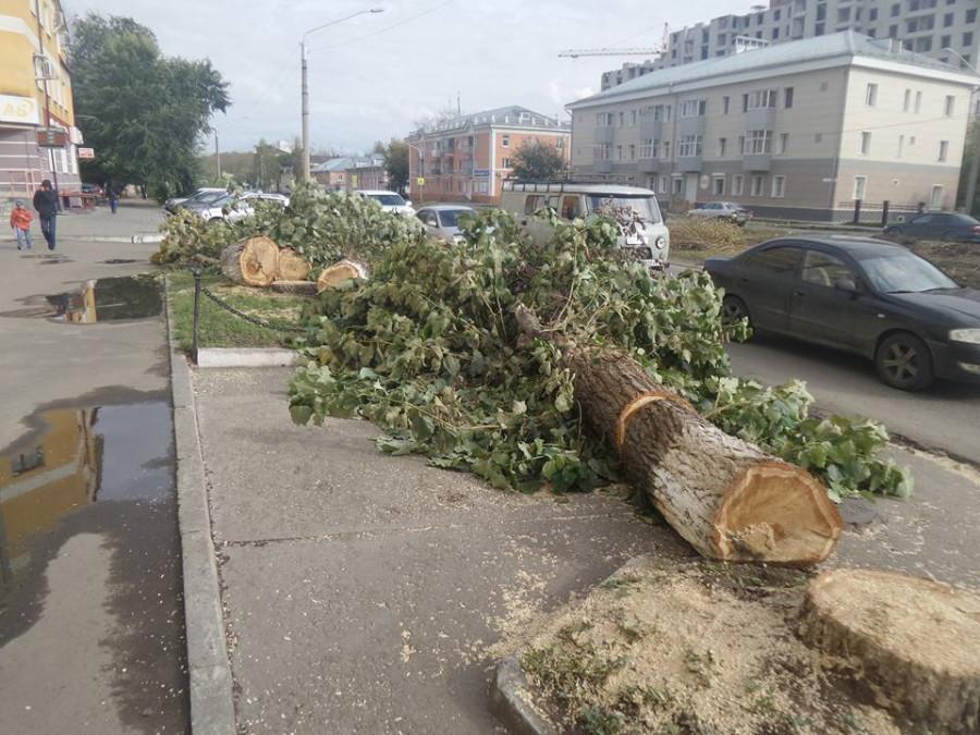 Рубка деревьев на улице Профинтерна. 14 сентября 2017 года.