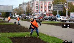 В Барнауле высаживают тюльпаны.