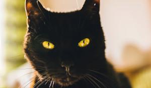 Черный кот.