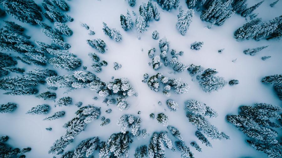 Зима. Лес.