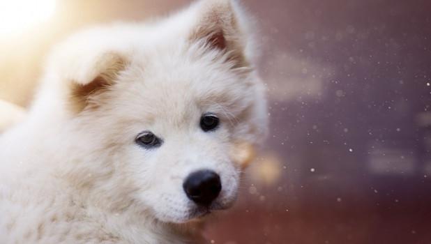 Щенок. Собака.