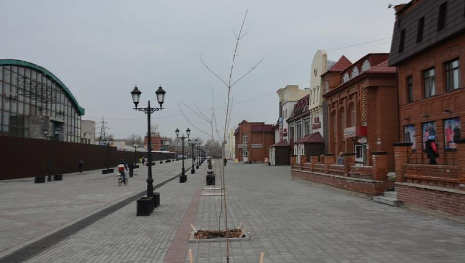 На улице Мало-Тобольской высадили приречные клёны.
