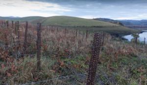 Владимир Вагнер утверждает, что алтайские виноградники полностью готовы к зиме. Алтайский район. Октябрь 2017 года