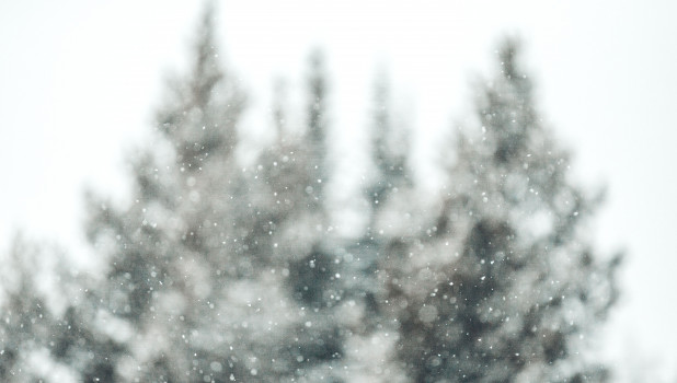 Зима в лесу. Снегопад.