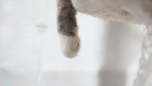 Лапки кошки.