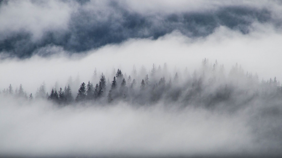 Зима в лесу. Туман.