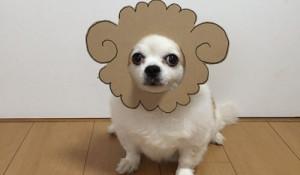 Косплей собаки