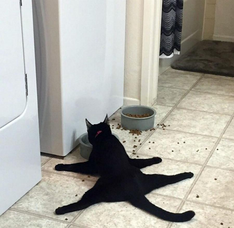 15 фотодоказательств того, что коты – существа с другой планеты.