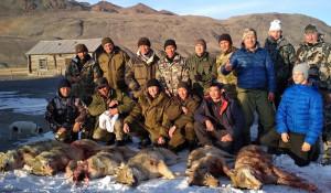 На Алтае волки терроризируют жителей нескольких сел.