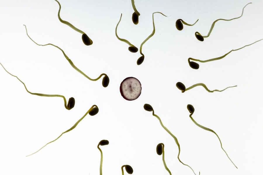 Нужен Донор Спермы