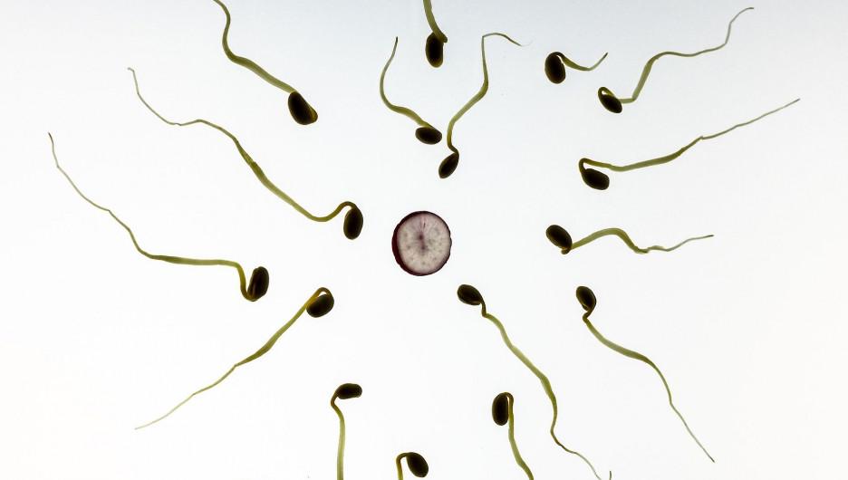 Количество сперматозоидов с порции спермы