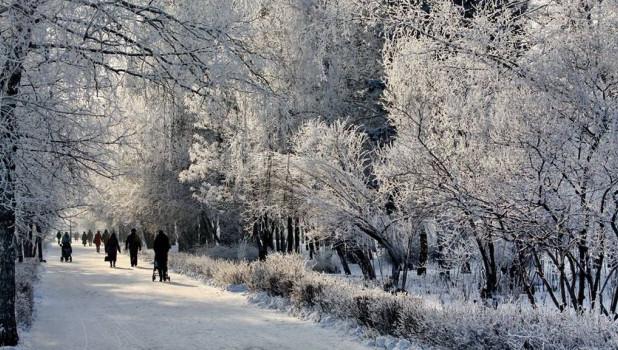 Зима. Иней. Рябина.